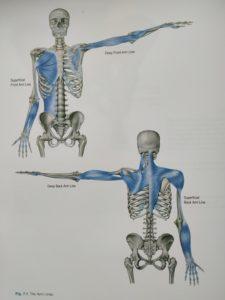 névralgie cervico brachiale-osteopathe-bayonne